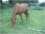 Cavallo Venise - ( (22 anni))