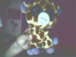 Giraffa jirafin - ( (5 mesi))