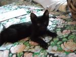 Licaone Hunter - ( (3 mesi))