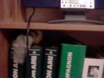 Ratto Gomar - ( (4 mesi))