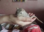 Topo Bianca - ( (1 anno))