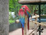 perroquet -